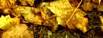 Lövblås banner BILD