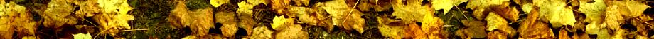 Lövblås banner